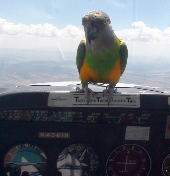 Parrot Flying Over Mountains