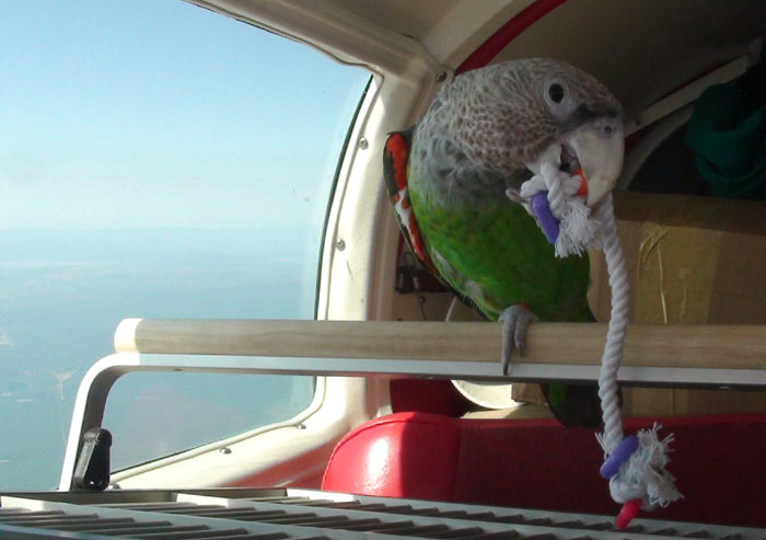 Parrot and String Toy
