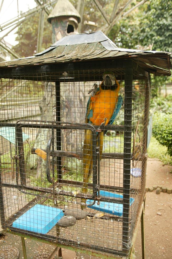 Trained Parrot Blog Articles About Training Parrots Tricks