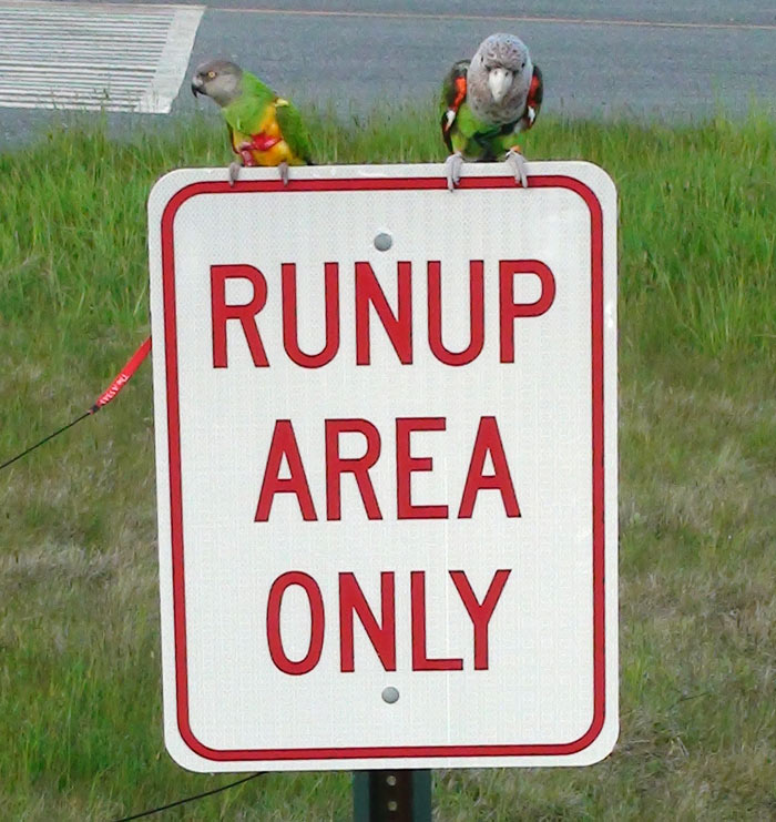 Parrots sitting on runup area only sign