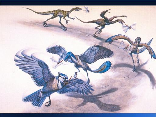 Graphic evolution of dinosaurs into birds