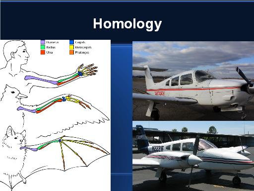 Homlogy of flying creatures