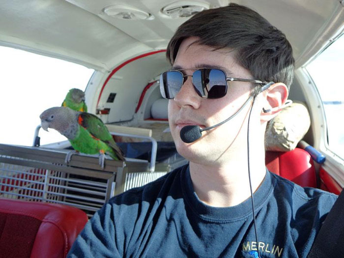 Flying Plane and Parrots to Phoenix