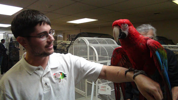 Parrot at rescue