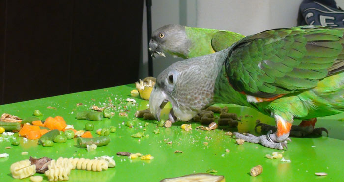 Thanksgiving Day Feast for Parrots
