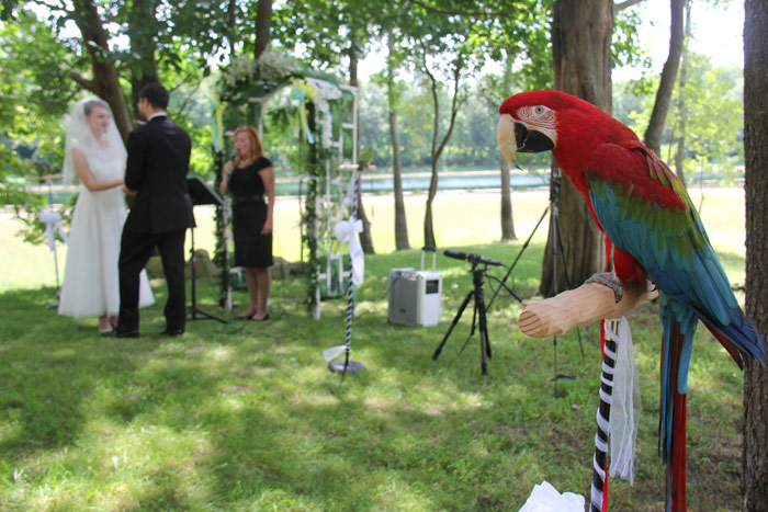 Macaw at Wedding Ceremony
